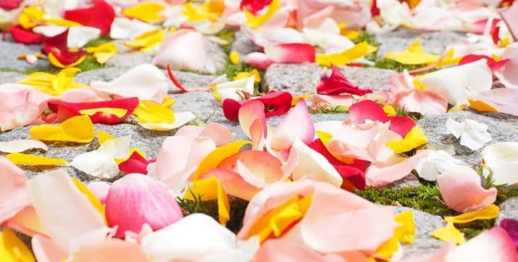 Pétalos de rosa de varios colores