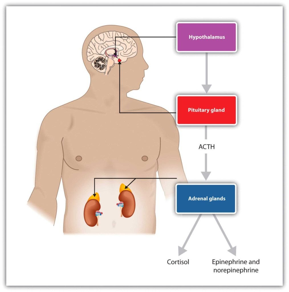 , 5 formas para equilibrar los niveles elevados de cortisol, Alimenta y Cura