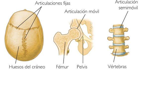 , Articulaciones – Que son, estructura, clasificación, dolor, ejemplos, Alimenta y Cura