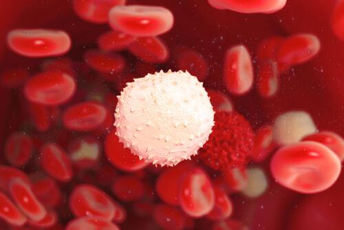 , ¿Cómo puedes fortalecer tu sistema inmunológico?, Alimenta y Cura