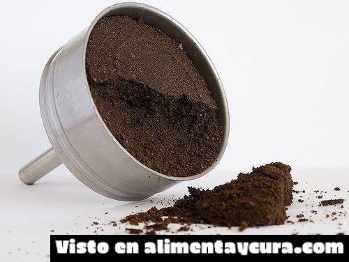 , ¿Es bueno consumir café para investigar?, Alimenta y Cura, Alimenta y Cura