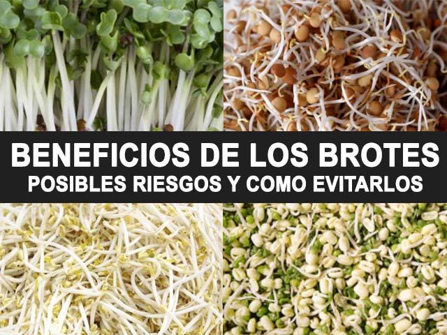, Brotes o semillas germinadas: Beneficios, problemas y como consumirlo, Alimenta y Cura