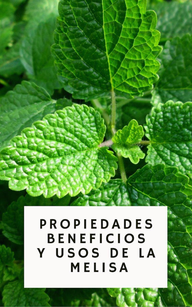 , Los grandes beneficios y propiedades medicinales de la Melisa, Alimenta y Cura