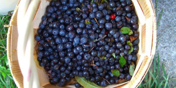 , Propiedades del mirtilo, Alimenta y Cura