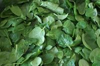 , Propiedades medicinales de la espinaca, Alimenta y Cura, Alimenta y Cura