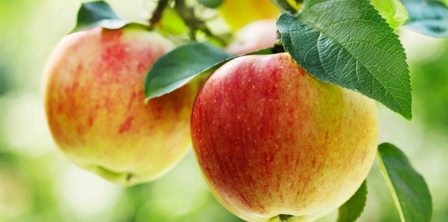 , Esta son las 5 Frutas recomendadas para diabéticos, Alimenta y Cura