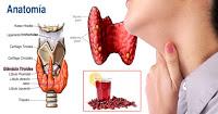 , Restaura tu glándula tiroides con esta poderosa bebida natural., Alimenta y Cura, Alimenta y Cura