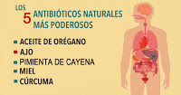, 5 excelentes antibióticos naturales que debes conocer y cómo usarlos, Alimenta y Cura, Alimenta y Cura