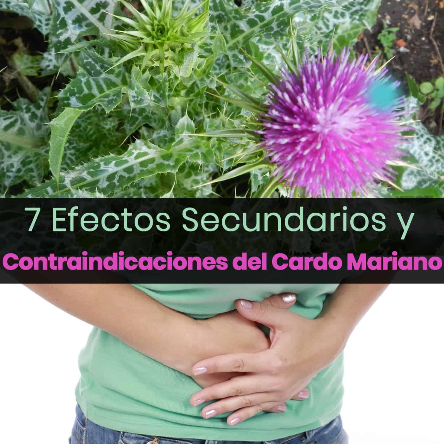 , 7 Efectos Secundarios Serios Y Contraindicaciones del Cardo Mariano, Alimenta y Cura