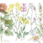 7 plantas medicinales para los tiempos modernos