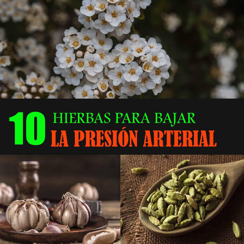 , Las TOP 10 Hierbas Medicinales Para Bajar La Presión Arterial Alta, Alimenta y Cura