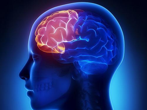 , Jugo Para La Memoria, Cerebro, Neuronas Y Contra La Demencia, Alimenta y Cura