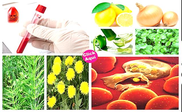 , Purifica La Sangre De Tu Organismo Con Estos Increíbles Tratamientos Naturales, Alimenta y Cura