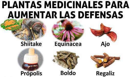 , REMEDIOS NATURALES PARA AUMENTAR LAS DEFENSAS, Alimenta y Cura