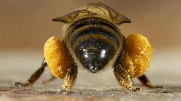 , Top 8 de utilidades del polen de abeja, Alimenta y Cura