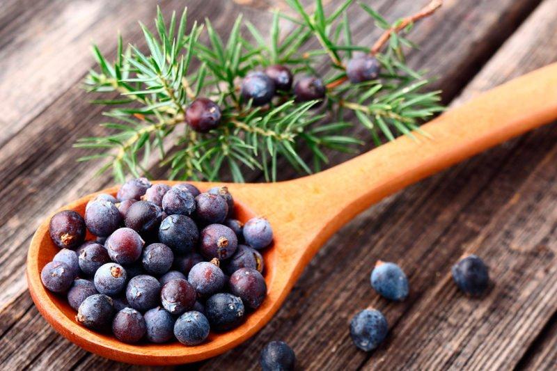 , Plantas medicinales para reducir la celulitis, Alimenta y Cura