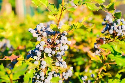 , 5 tratamientos herbales tópicos para la psoriasis, Alimenta y Cura, Alimenta y Cura