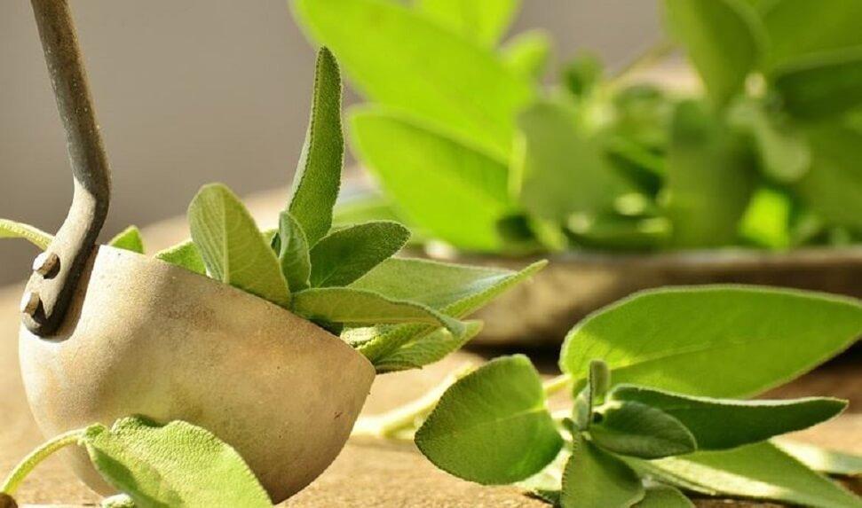 , 5 soluciones naturales para acabar con el mal olor en las axilas, Alimenta y Cura, Alimenta y Cura