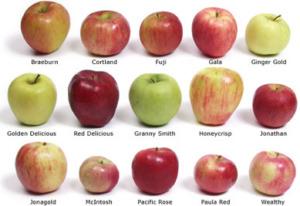 , Propiedades de la manzana, Alimenta y Cura