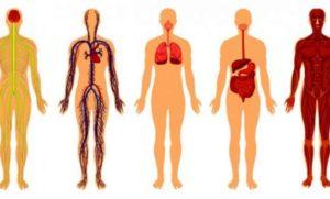 6 cosas que le pasarán a tu cuerpo cuando decidas dejar de comer carne
