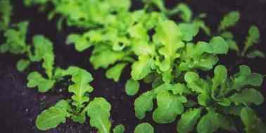 , Ácido fólico o B9, la vitamina que da forma a nuestro organismo, Alimenta y Cura, Alimenta y Cura