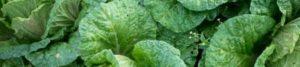 , Ácido fólico o B9, la vitamina que da forma a nuestro organismo, Alimenta y Cura