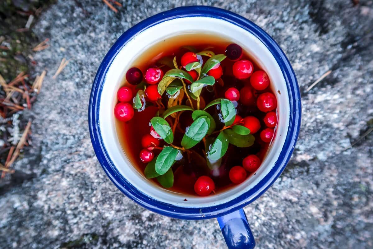 , 5 beneficios de la infusión de arándanos, Alimenta y Cura